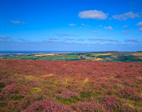 North Yorkshire Moors, Nr. Whitby, England.