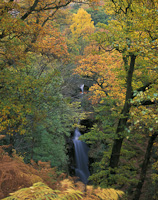 Aira Force, Nr. Ullswater, Cumbria, England.