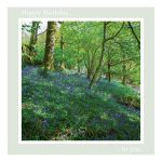 Birthday Card - Bluebells - message inside reads: best wishes on your birthday