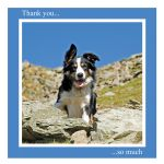 Thank You card - Tag the Border Collie - left blank for your own message