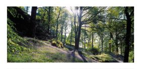 Cumbria greeting card - Bluebell Wood - blank for your own message
